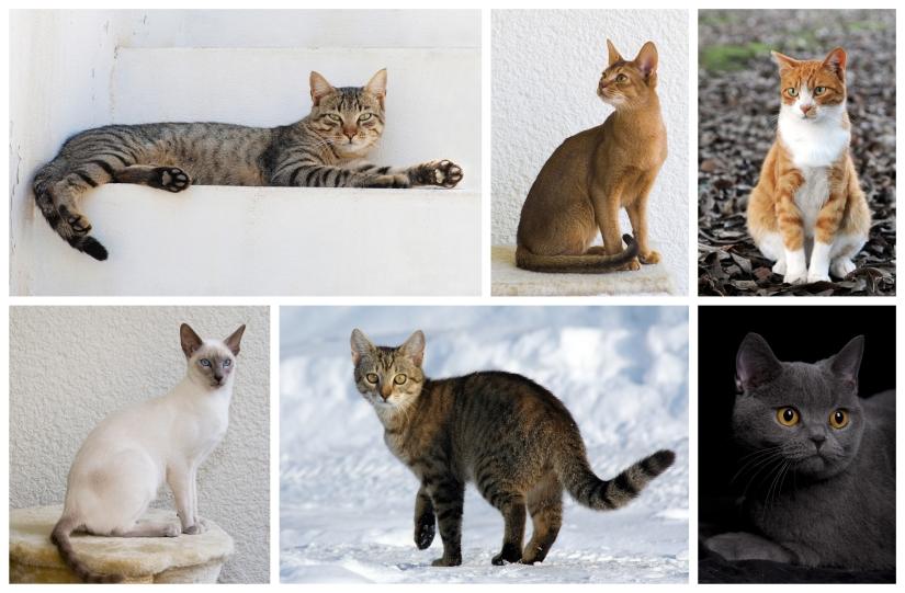 Cat_poster_1.jpg